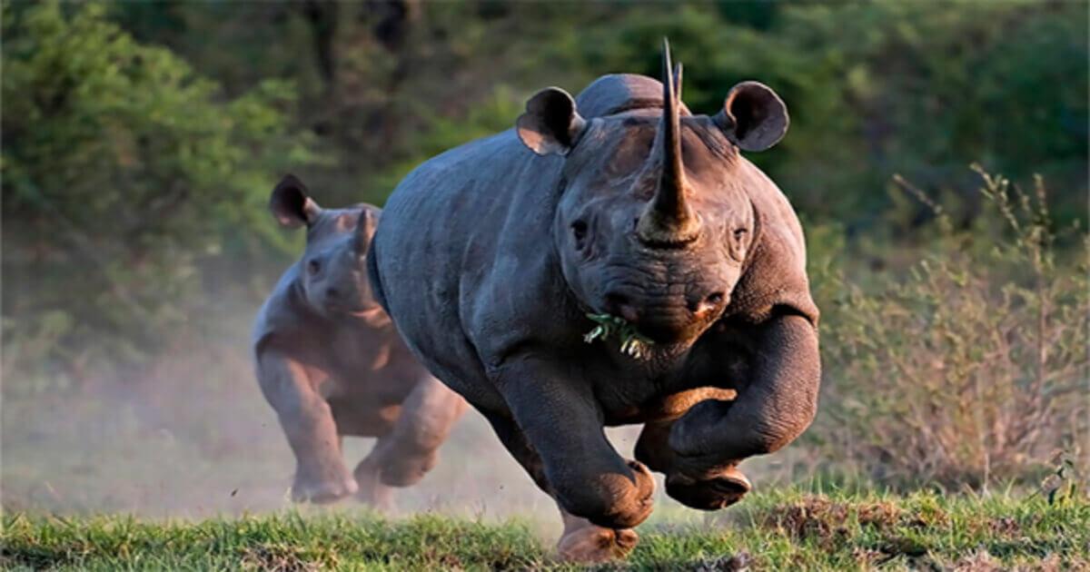 25 animais mais perigosos que existem em todo o mundo
