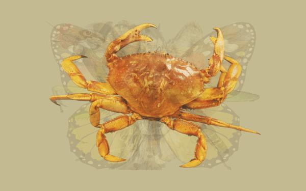 Teste imagem caranguejo
